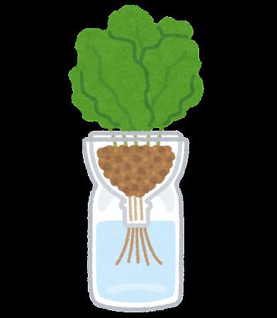 ペットボトル水耕栽培のイラスト