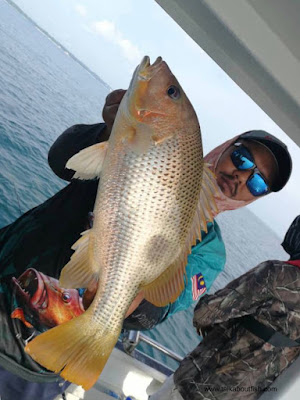 Golden Snapper