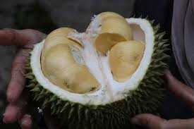 Kebaikan Buah Durian Bagi Kesihatan
