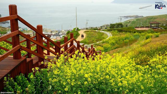 Khám phá Jeju sinh đẹp