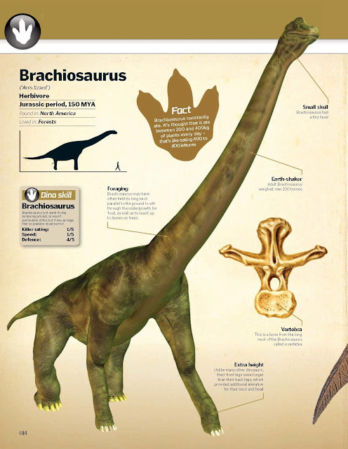 Brachiosaurus ('Arm lizard')  Herbivore Jurassic period, 150 MYA, Found in: North America, Lived in: Forests. Dino skill: Brachiosaurus just spent its day lumbering around, so wasn't particularly skil full, but it was so large that no predator could harm it. Brachiosaurus Killer rating: 1/5, Speed: 1/5, Defence: 4/5  Foraging  Brachiosaurus may have often held its long neck parallel to the ground to sift through the undergrowth for food, as well as to reach up to leaves on trees  Extra height  Unlike many other dinosaurs, their front legs were longer than their back legs, which provided additional elevation for their neck and head  Small skull  Brachiosaurus had a tiny head  Earth-shaker  Adult Brachiosaurus weighed over 100 tonnes  Vertebra  This is a bone from the long neck of the Brachiosaurus called a vertebra
