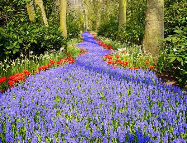 Belos jardins, com flores que cobrem o chão,formando um grande tapete vivo