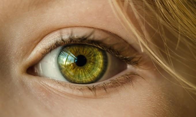 आँख का वजन कितना होता है ?