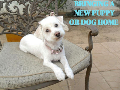 Tips for bringing home a new puppy or dog.  Adding a new dog or puppy to your family
