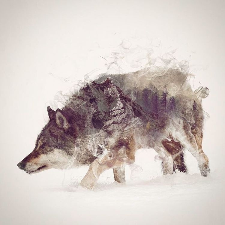 02-Wolf-Daniel-Taylor-Ghostly-Animals-in-Manipulated-Photographs-www-designstack-co