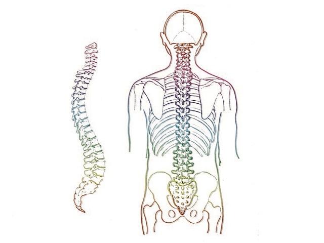 Columna vertebral, eje de la salud y la serenidad.
