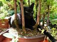 gato negro en un bonsai