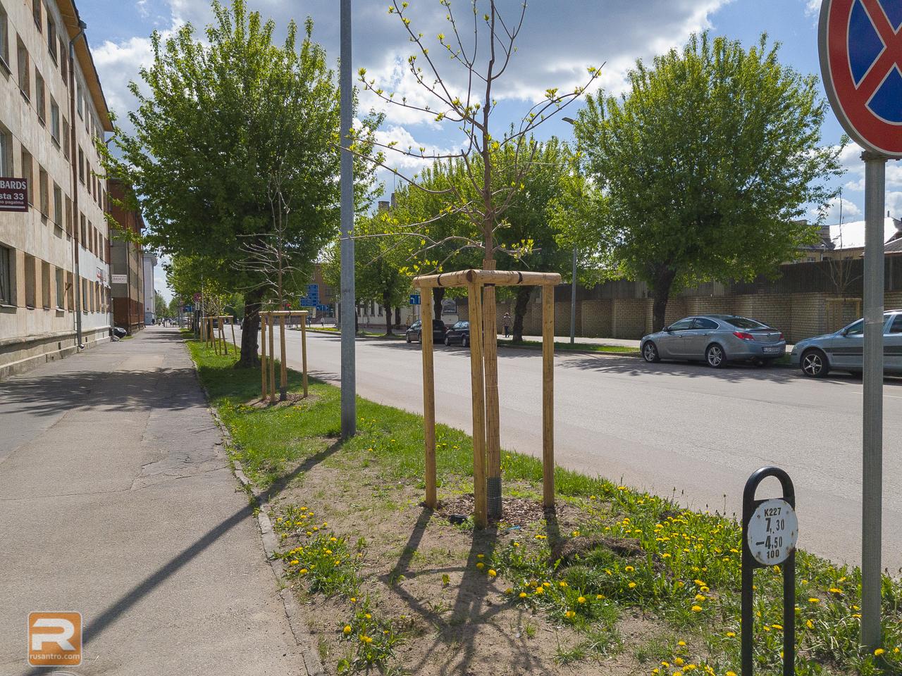 Iestādīti koki Pasta ielā