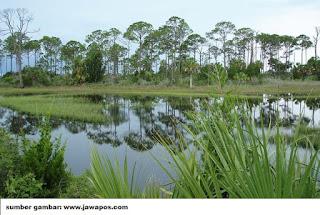 lahan rawa untuk arah pengembangan pertanian