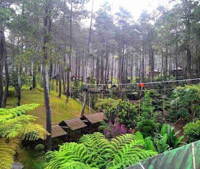 Lokasi Orchid Forest Cikole Lembang Bandung
