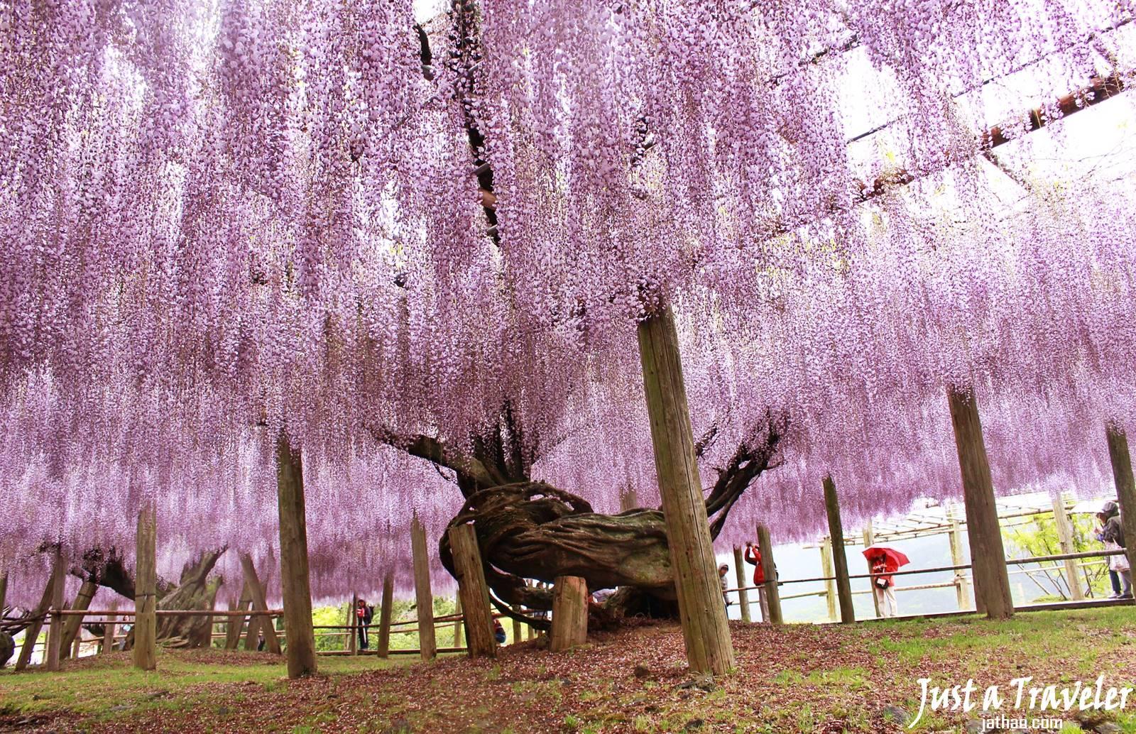 福岡-景點-推薦-河內藤園-福岡好玩景點-福岡必玩景點-福岡必去景點-福岡自由行景點-攻略-市區-郊區-旅遊-行程-Fukuoka-Tourist-Attraction