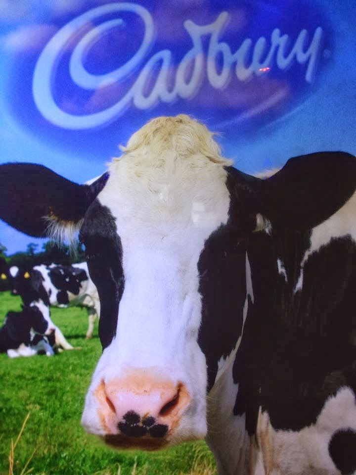 A poster with a cow and the cadbury logo