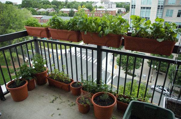 Tư vấn cách trồng rau sạch tại ban công chung cư 789 Xuân Đỉnh