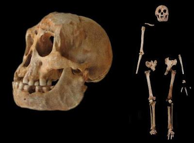 esqueletos de un homo floresiensis