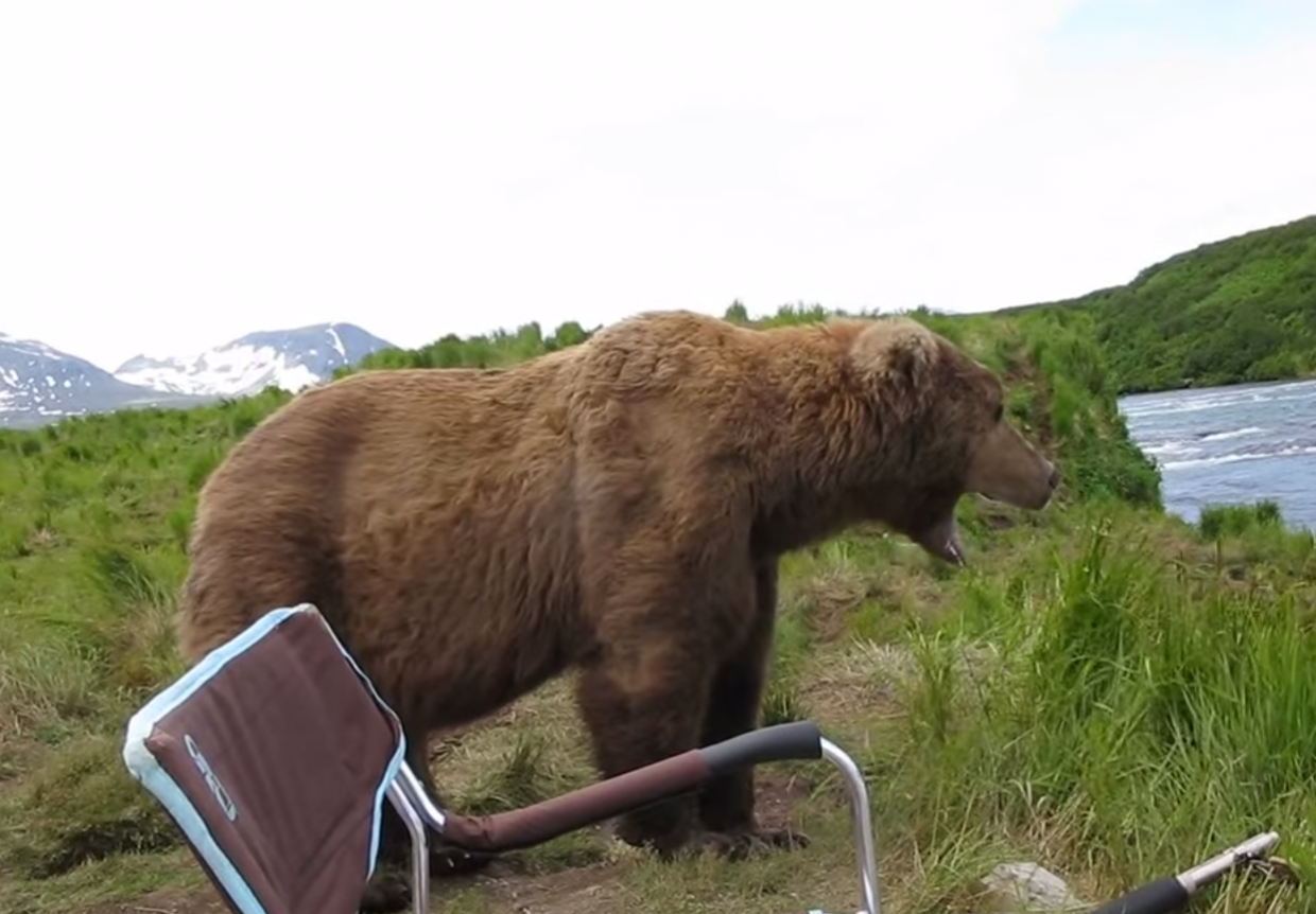 …and then yawns! - A Brown Bear Sat Down Right Next To Him While He Filmed It All!