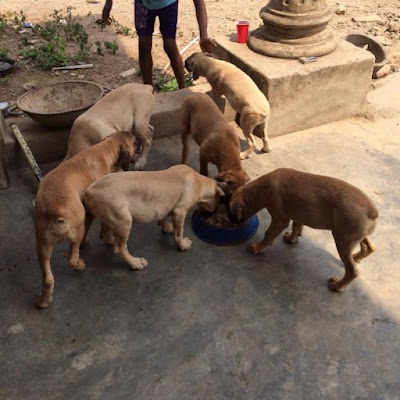 Five persons caught feeding dog with new-born baby in Katsina