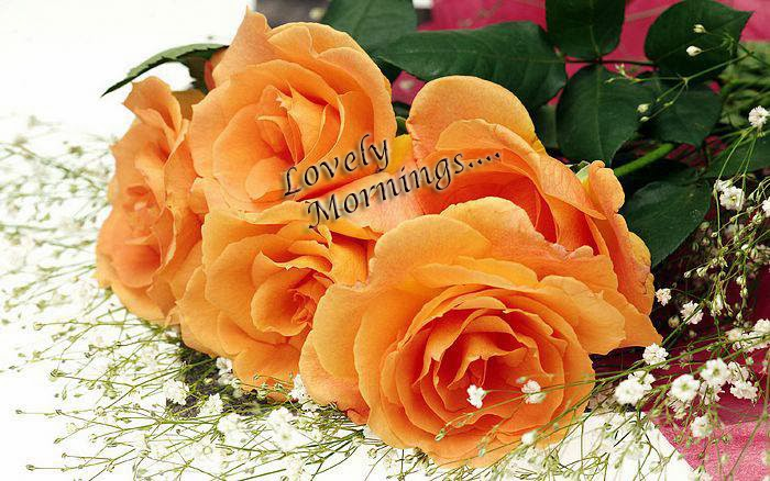 lovely orange rose wallpaper