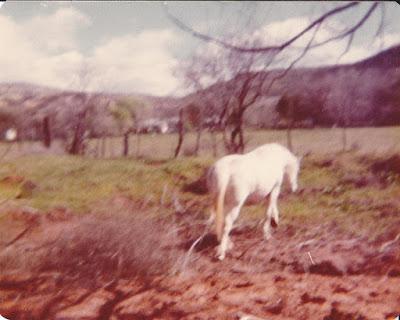Horse - Tickaboo Ranch - Camp Verde, Arizona