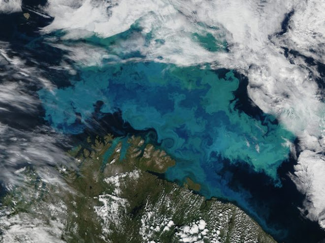 From tiny phytoplankton to massive tuna: how climate change will affect energy flows in ocean ecosystems