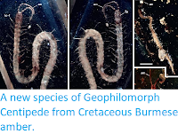 http://sciencythoughts.blogspot.co.uk/2014/03/a-new-species-of-geophilomorph.html