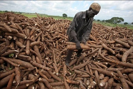 Federal Government to Begin Export of Farm Produce