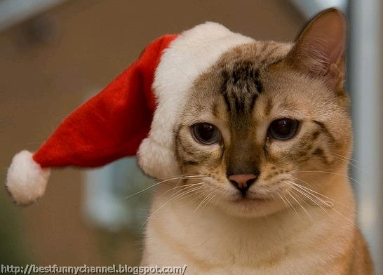 Cat in red cap.