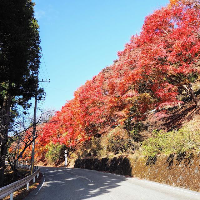秩父 三峯神社 紅葉