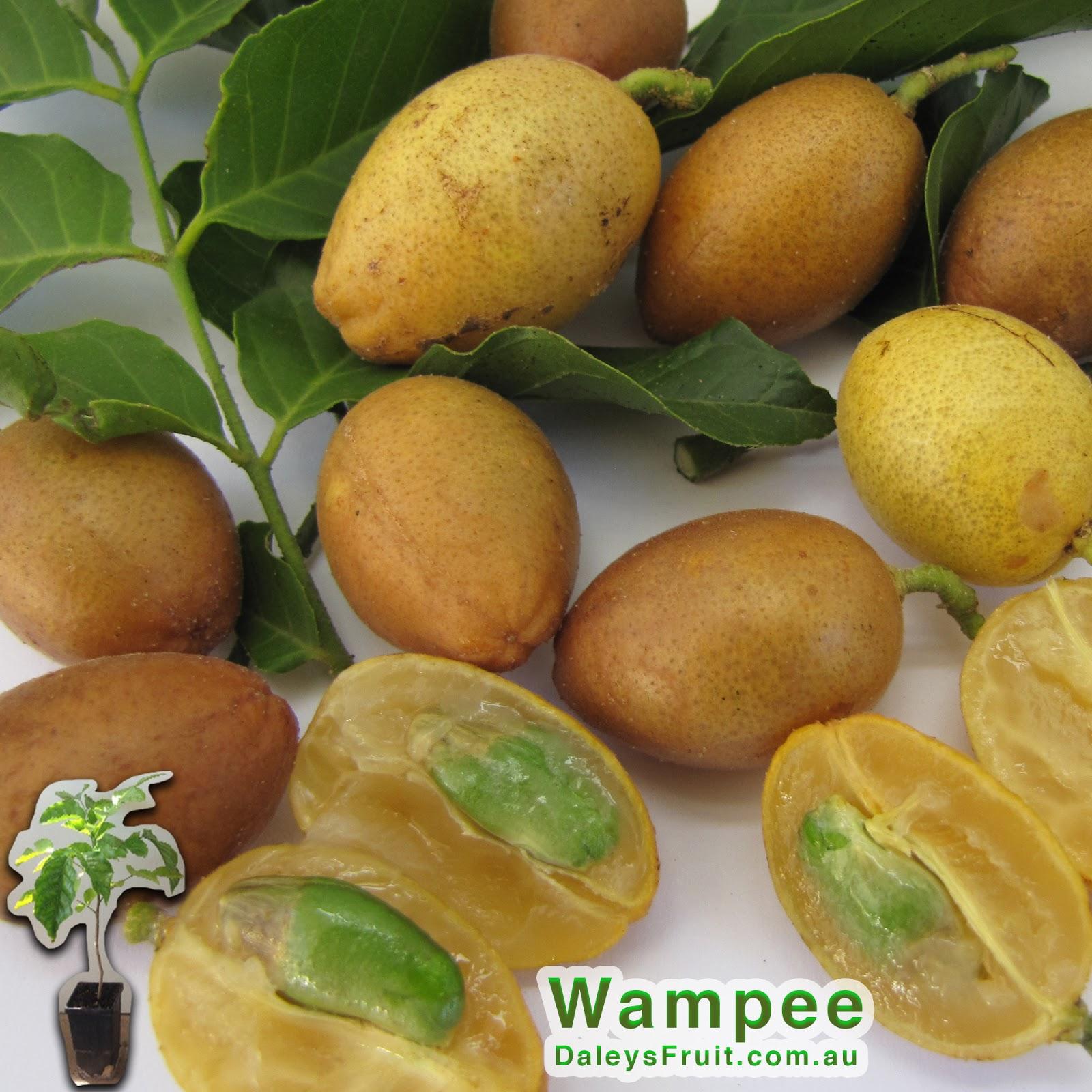Daleys fruit tree blog wampee fruit trees for sale for Fruit trees for sale