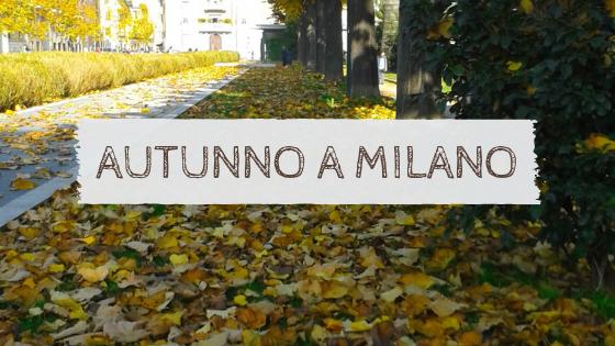 Viale alberato a Milano, foliage