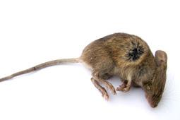 Makan Sup Kemasan ada Bangkai Tikus Wanita AS Ini Tuntut Rp 7,12 Miliar