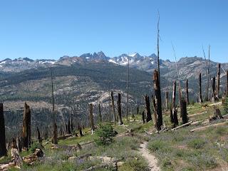 Am Rande des Tals der Middle Fork; die Spuren des Waldbrandes von 1992 sind deutlich zu sehen