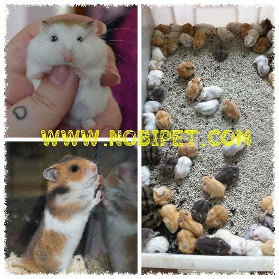 noi-ban-chuot-hamster-o-da-nang-gia-re-nhat-1