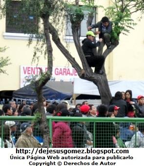 Foto de peruanos trepados en el arbol para ver el Desfile Gran Parada Militar  Peru por Jesus Gomez