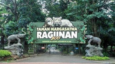 kebun binatang ragunan salah satu wisata yang peporit di jakarta