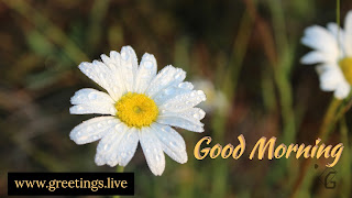 good morning greetings flower wishes
