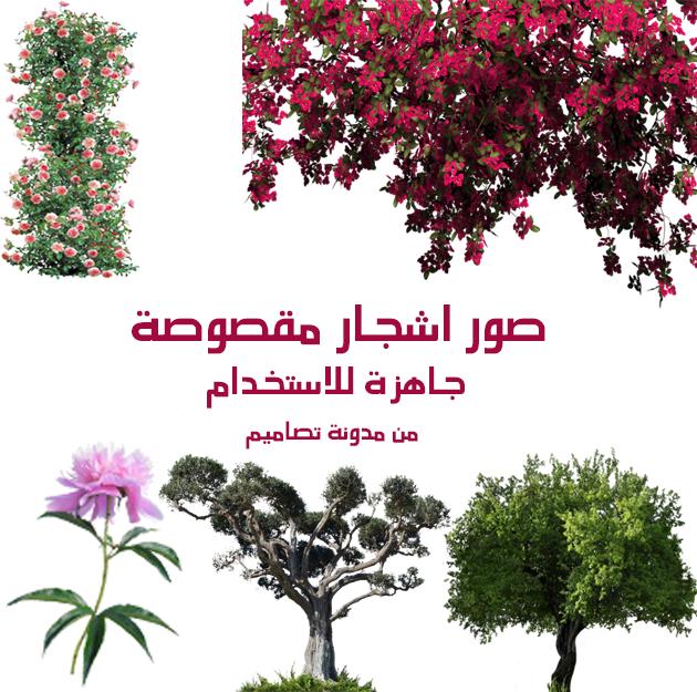 صور اشجار مقصوصة صور اشجار بدون خلفية Png مقصوصة ومفرغة