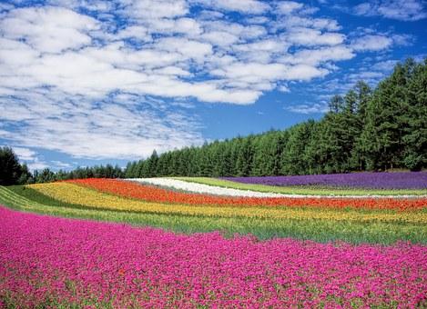 Flower Garden, Jepang