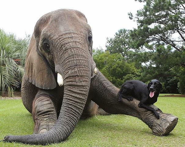 Extrañas parejas de animales.