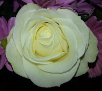 White rose in bouquet, taken from above