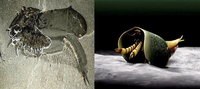 Ancient Anthropod With Gnarly Claws Discovered in Burgess Shale