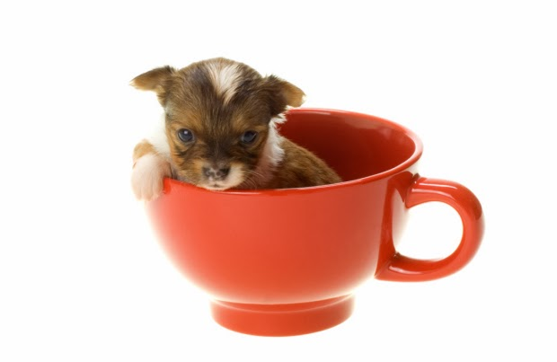 ffcf6117a16 'Teacup' is a name given to very small dogs measuring less than 17 inches,  and typically weighing in at only 4 pounds. Basically, any dog breed can be  ...