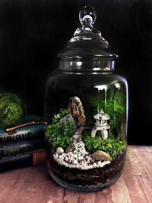 Aquarium Ikan Cupang Unik