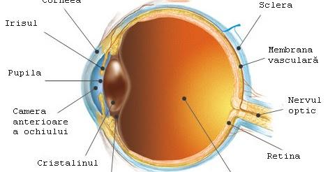 ochii și vederea omului)