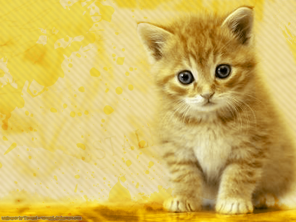 WALLPAPERS WORLD : Cats wallpapers