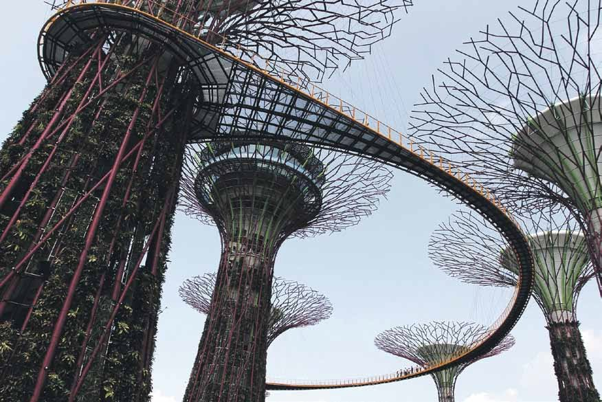 Visitors will have a panoramic view of the Bay South Garden from the suspended walkway linking two of the Supertrees.