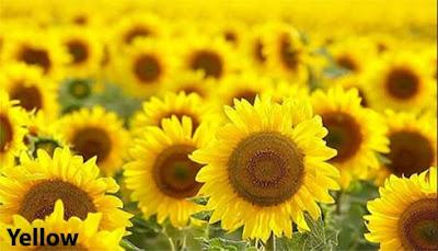 Psikologis warna kuning