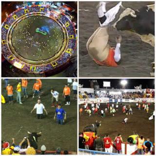 toros a la tica, fiestas zapote, redondel de toros, toreros improvisados