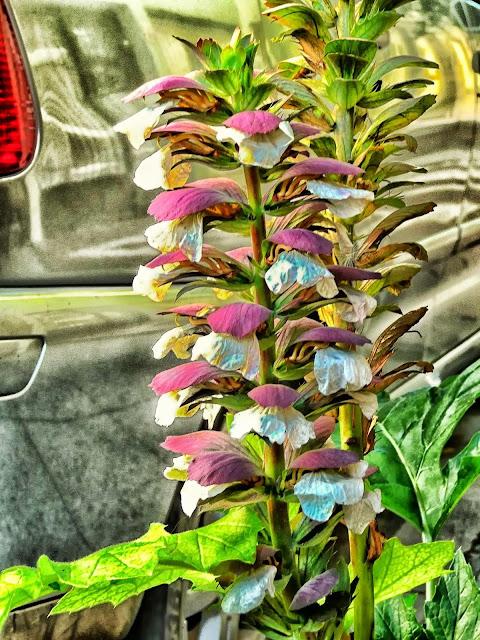 Una planta con flores