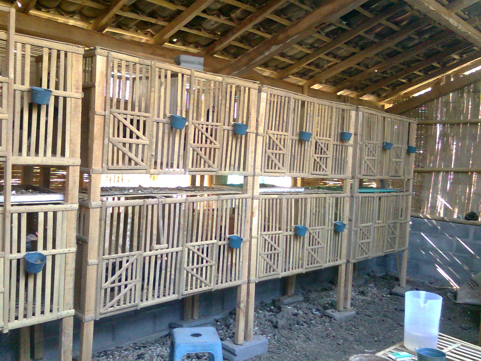 Ayam Bangkok: KANDANG AYAM