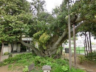 慈眼寺の混生樹